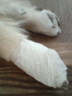 犬 肉 球 怪我